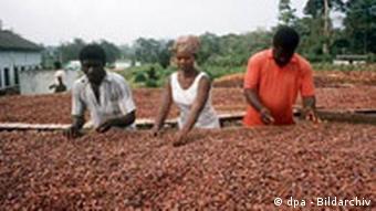 Verarbeitung von Kakao-Bohnen in Ghana (Foto: dpa)