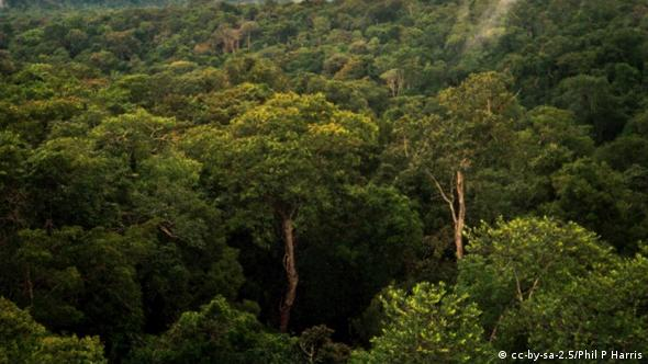 Amazon basin forest north of Manaus