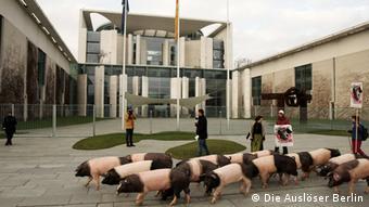 Rosa-braune Schweine laufen vor dem Kanzleramt in Berlin. Eine Aktion der Bäuerlichen Erzeugergemeinschaft Schwäbisch-Hall (Foto: Die Auslöser.net, Berlin)