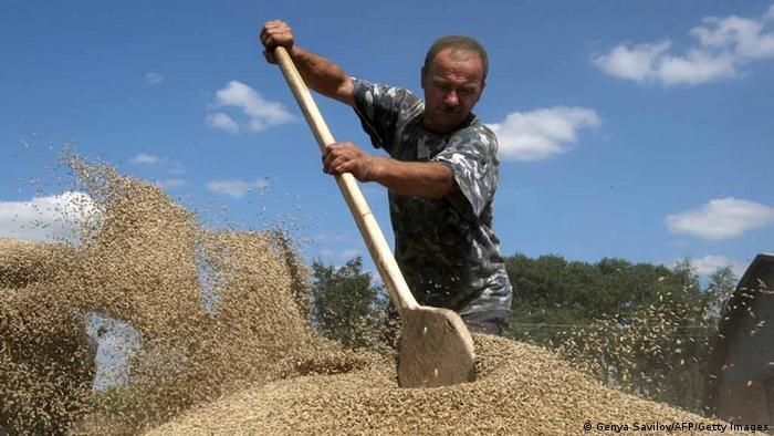 Зерна вкрали на 800 мільйонів гривень