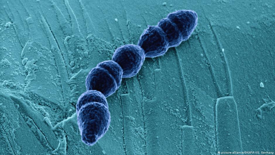 تخليق بكتيريا لا يمكنها البقاء بدون الإنسان | DW | 23.01.2015