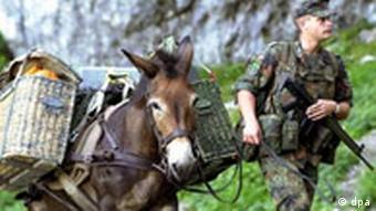Μουλάρια στην υπηρεσία του στρατού