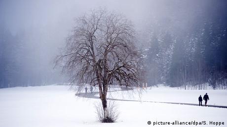 Baum im Winter (picture-alliance/dpa/S. Hoppe)