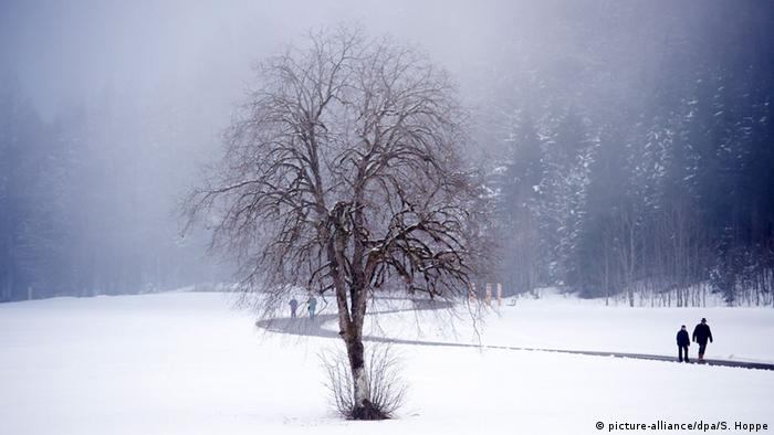 A tree in winter (picture-alliance/dpa/S. Hoppe)