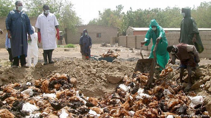 Dead birds are dumped in a pit in Nigeria (2006).