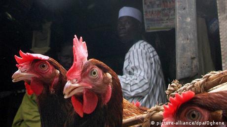 Vogelgrippe in Nigeria Archiv