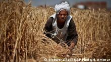 Ägypten Landwirtschaft