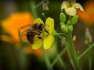 'Od pčelarstva se može dobro zaraditi'