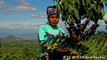 A woman standing among trees and bushes (Photo: CC BY 2.5: Robert Goodier, Source: http://en.wikipedia.org/wiki/Rainforest_Alliance