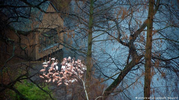 Фламинго в Берлинском зоопарке
