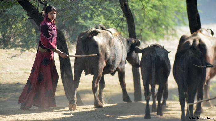 Indien Landwirtschaft Dürre Wassermangel