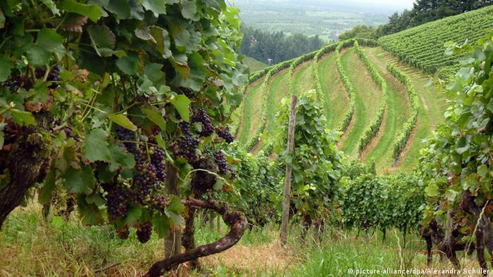 Баден-Баден – винное высокогорье