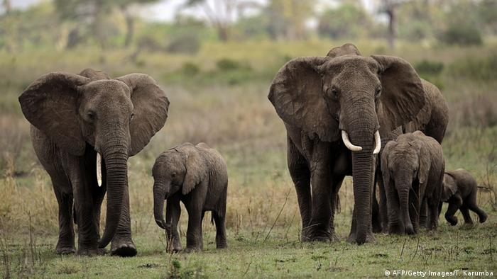 Serengeti Nationalpark in Tansania