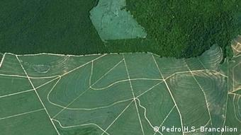 Aerial photo of a forest (Photo: Pedro H.S. Brancalion)