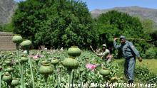Afghanistan Drogenanbau