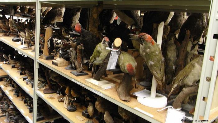 Shelves containing stuffed birds