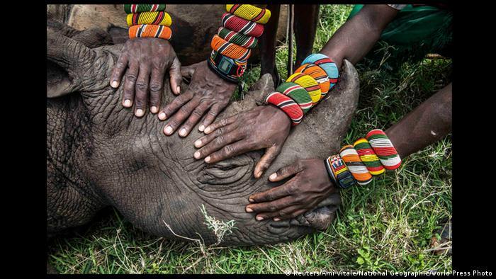 Bildergalerie World Press Photo 2015