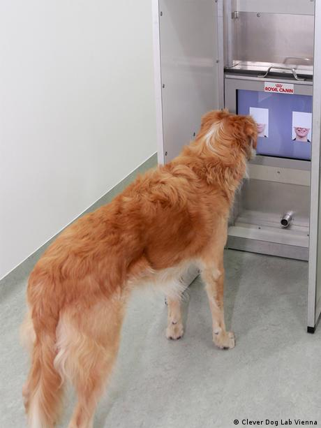A dog in front of a touch-screen Monitor with faces (photo: Clever Dog Lab Vienna)