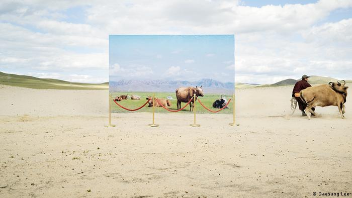 A man pulls a reluctant bull towards a life-size canvas of animals, which stands on sand