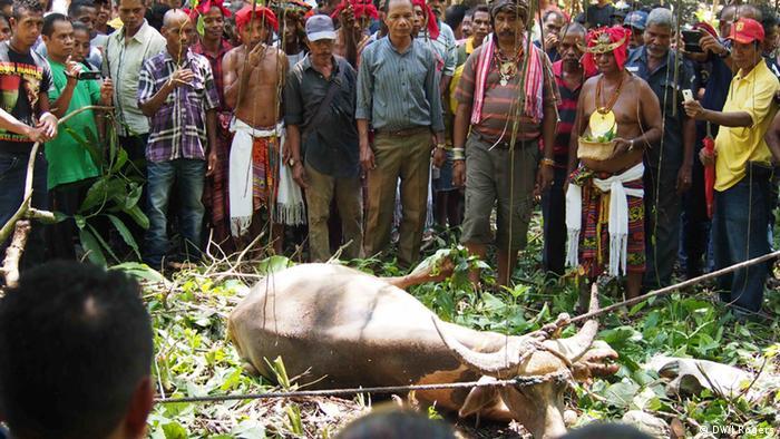 Leben in Tara Bandu Ost Timor (DW/J.Rogers)