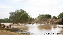 Description of photo: Orma Pastoralists herd cattle along the Tana River Title: The Tana River Series title (if there are several pictures about one topic): The Tana River Keywords: Tana River, Kipao, Kenya Photographer/source: Adrian Gregorich When was the photo taken: June 2014 Where was the photo taken: Tana River, crossing to Kipao, Kenya Caption: The Tana River is an essential part of life, and a source of competition, for both traditional pastoralists and farmers Declaration: I hereby declare that I took this photograph and am giving DW the right to use it online, including social media. In case the picture was taken by a third party, I do hold the rights to this image and DW is entitled to use it online and in social media. Adrian Gregorich 59 Hackett Street, Ottawa, ON K1V 0P6 Canada ad.gregorich@gmail.com
