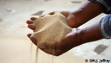 White teff grain. Photo by James Jeffrey.