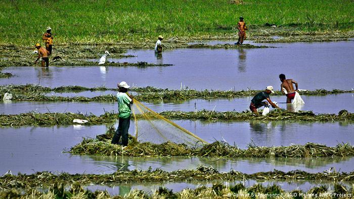 Rice farming in Cambodia (Apiwat Sukpimontri/USAID Mekong ARCC Project)