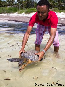 Local Ocean Trust member releasing hawksbill turtle into ocean