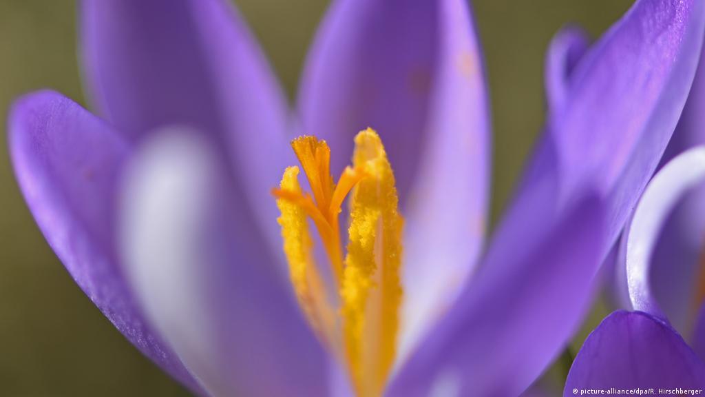 فصل الربيع متعة للبعض وشقاء للبعض الآخر منوعات نافذة Dw عربية على حياة المشاهير والأحداث الطريفة Dw 16 03 2015