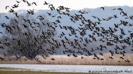 Wildgänse fliegen über einen See