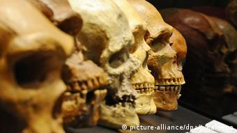 Symbolbild Homo Sapiens Schädel eines Menschen (picture-alliance/dpa/J. Kalaene)