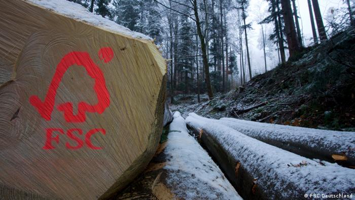 FSC logo painted onto chopped-down tree trunk