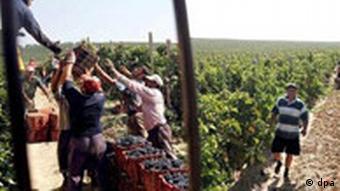 Weinanbau in Mazedonien