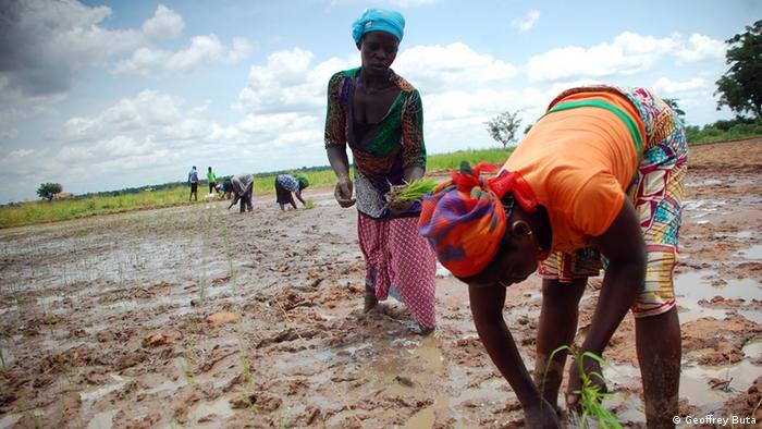 Frauen auf einer Bewässerungsfarm in Ghana (Foto: Geoffrei Buta).