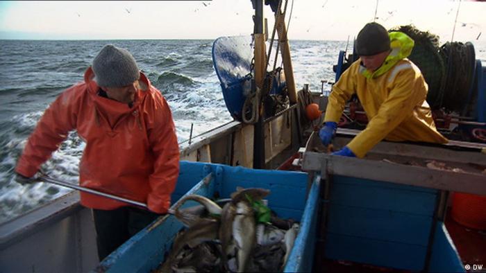 Los pescadores encuentran cada vez más residuos de plástico en sus capturas.