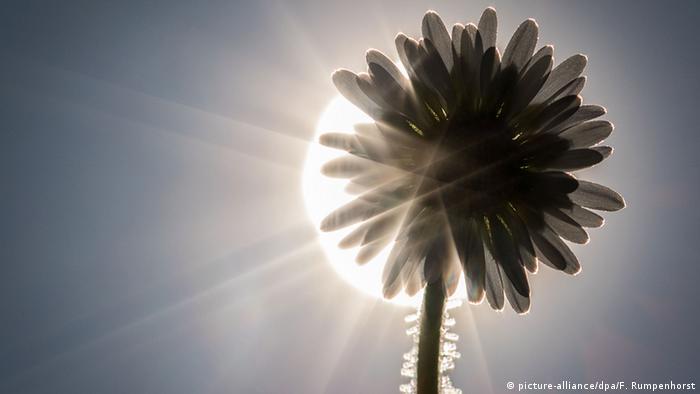 The sun behind a flower