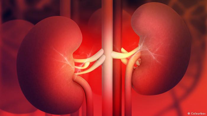 Symbolbild Menschliche Niere Grafik (Colourbox)