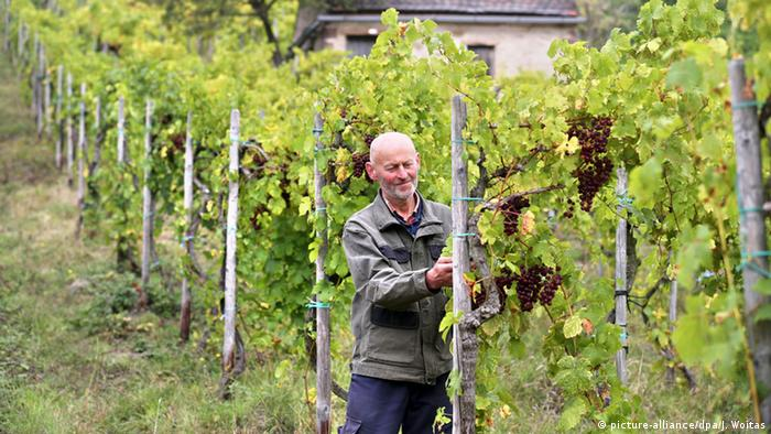 Saale-Unstrut-Gebiet Weinbau