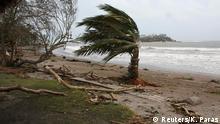 A palm tree is damaged on a beach near Port Vila, the capital city of the Pacific island nation of Vanuatu (photo: REUTERS/Kris Paras)