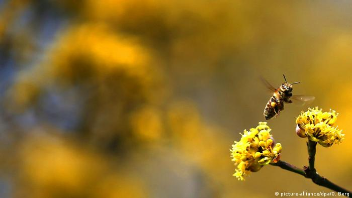 Saving bees from city balconies? | Environment| All topics from