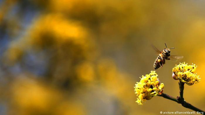 Bild des Tages Biene in Köln