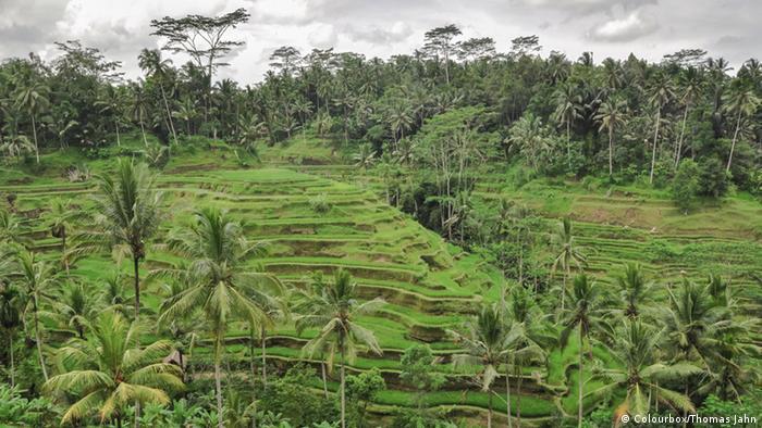 Bildergalerie Tourismus in Indonesien Ubud