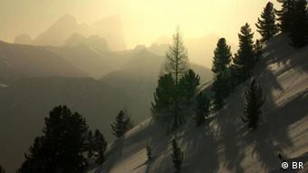 Ο θρύλος λέει ότι ο Αντόνιο Στραντιβάρι ταξίδευε δύο μέρες για να βρει τα κατάλληλα δέντρα