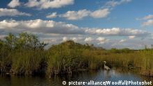 USA Everglades in Florida (picture-alliance/Woodfall/Photoshot)
