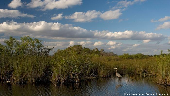 د اورگلېدز (Everglades) ملي پارک په شمال کي د اوکیچوبی (Okeechobee) د بحیرې او جنوب کي د فلوریدا تر نیمه جزیرې پوري غزیدلی دی. دغه پارک د هغه د رطوبت او وښو څخه ډکو چمنونو له کبله ډیر مشهوره دی. نوموړی پارک هم د یونسکو د جهاني میراث په لست کي شامل دی.