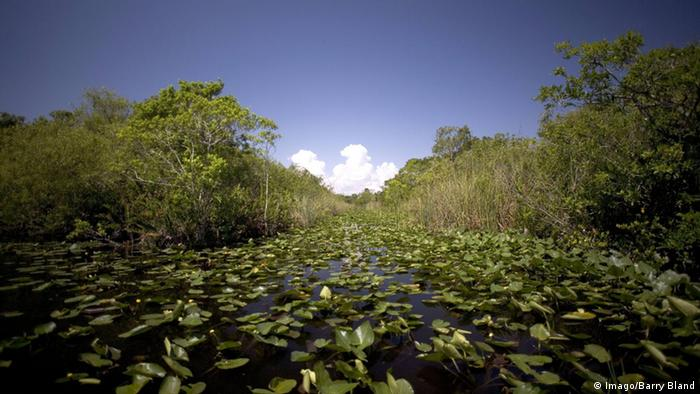 Florida Everglades Nationalpark Sumpflandschaft