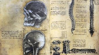 Zeichnungen von Schädeln und Wirbelsäulen (picture alliance/Prisma Archivo)