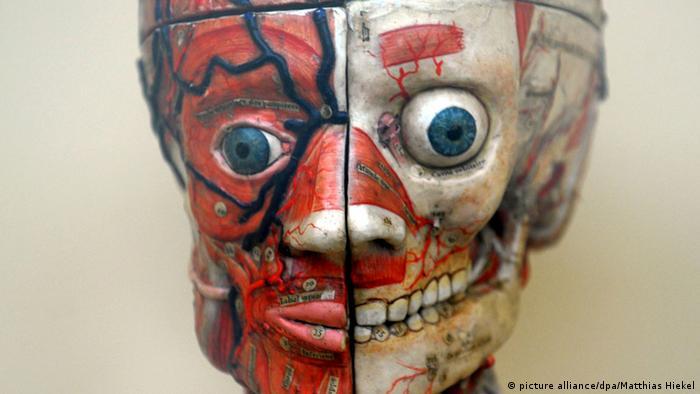 Экспонат Немецкого музея гигиены