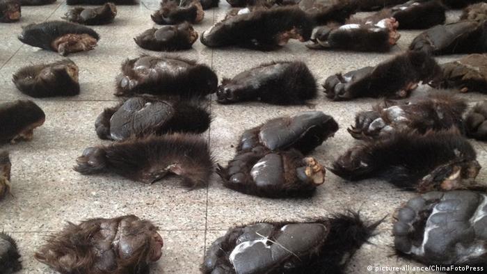 China beschlagnahmte Bärentatzen Schmuggel Wildererei Markt Exotische Tierteile