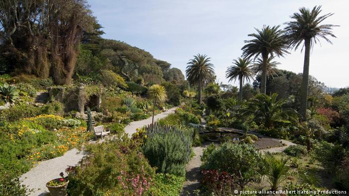 Palmen und tropische Pflanzen Cornwall